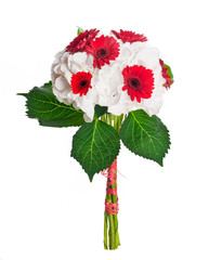 Multi-colored gerbera daisies on a white background