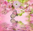 Pink flower of an Oriental cherry in and butterfly