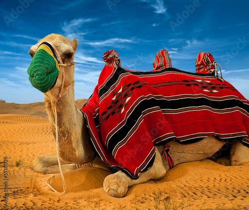 Fototapeten,kamel,ocolus,sand,reisen