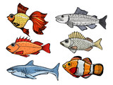 set of kinds of the fish