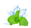 Mint leafs water splash - 55306327
