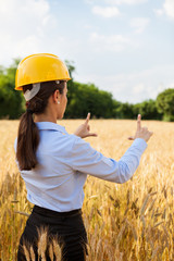 Female architect inside a wheat field