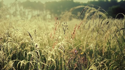 Wild meadow in spring. Full HD footage.