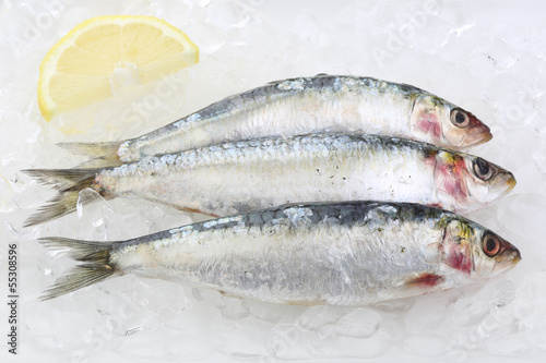 canvas print picture three fresh sardines on ice