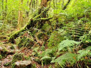 Forest in New Zealand