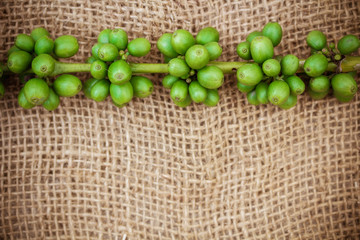 Fresh coffee beans on canvas texture background