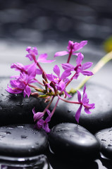 branch orchid with therapy stones with water drops