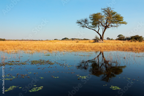 African Acacia tree and reflection, Wkando river
