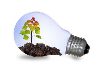 Incandescent light bulb with a plant