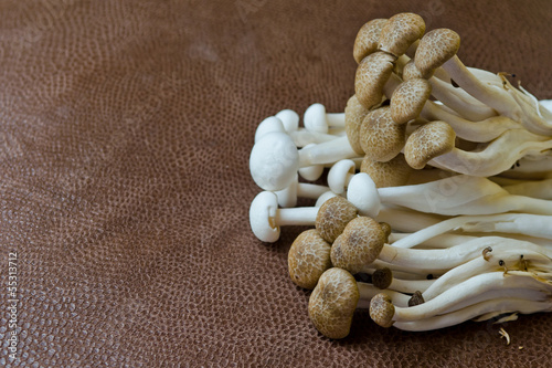 Group of Brown Beech mushroom and  White Crab mushroom on brown