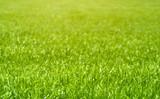 Fototapeta Grass Background
