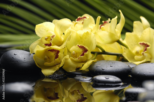 Set of orchid and black stones with palm leaf and reflection