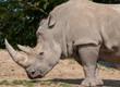 Постер, плакат: Rhinoc