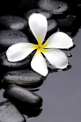 frangipani and black pebbles