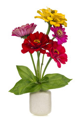 Minimalistic  bouquet  - mini zinnia  flowers