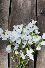 White bell-flowers