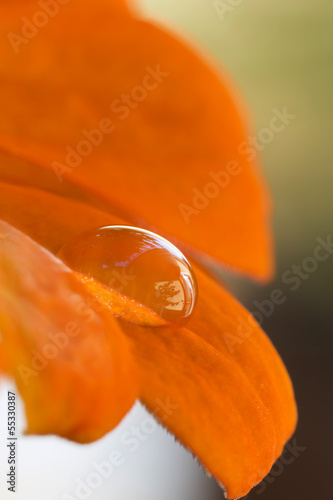 Einzelner Wassertropfen auf Blütenblatt © Harald Biebel