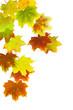 Herbst 41