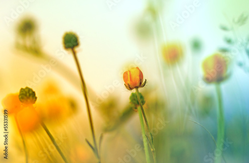 Yellow flowers (wild meadow flower)