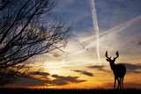 Deer silhouette at sunset