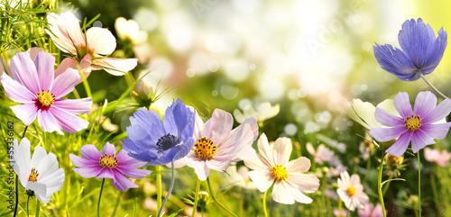Obraz na Plexi kwiaty