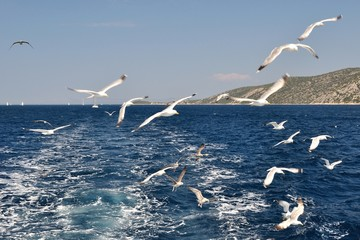 Flock of seagulls flying over sea behind the ship