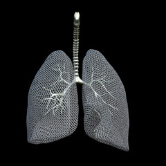 Mesh Lungs