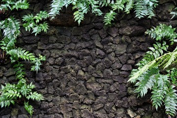 Stone wall with plant ferns