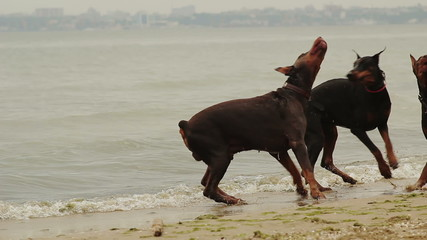 Happy Dogs Playing at the Sea
