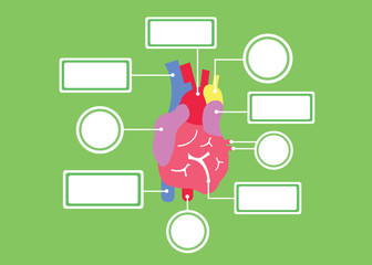 heart system vector cartoon
