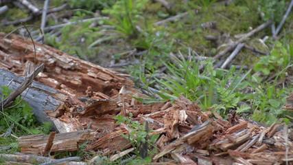 dry log shattering slow motion