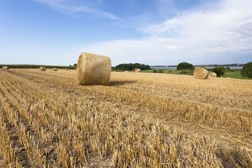 Abgeerntetes Getreidefeld in der Uckermark