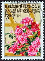 Azaleas (Belgium 1970)