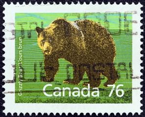 Grizzly bear (Ursus arctos horribilis) (Canada 1988)