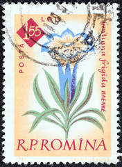 Gentian Flowers (Romania 1961)