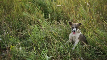 Puppy at the Grass 1