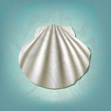 Sea scallop on a blue background, realistic illustration