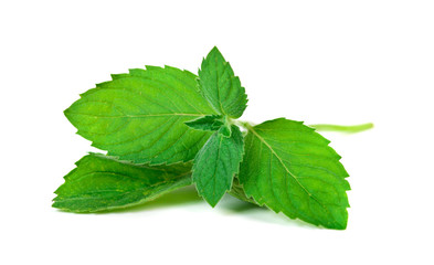 Mint herb leaves
