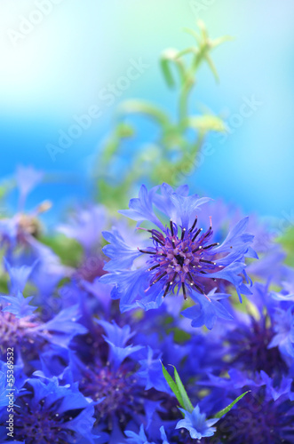 Beautiful bouquet of cornflowers on blue background