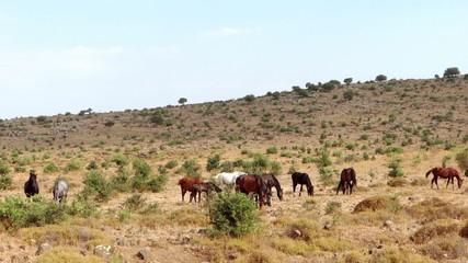 wild horses of sicily