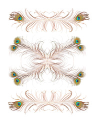 Collection of design elements make from peacock feathers.