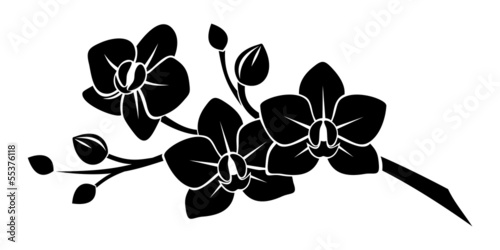 Black silhouette of orchid flowers. Vector illustration. - 55376118
