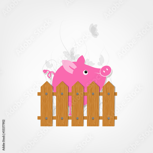 Funny pig behind wooden fence of garden for your design