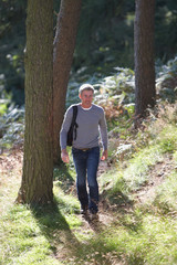 Man On Country Walk Through Woodland