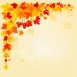 Autumn background with colorful leaves. Back to school. Vector i