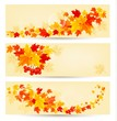 Three autumn backgrounds with colorful leaves. Back to school. V