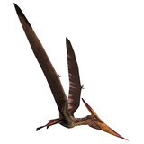 Pteranodon on White