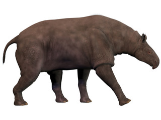 Paraceratherium on White