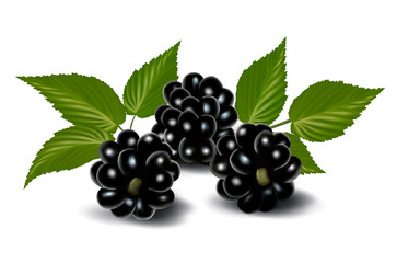 Fresh berries with leaves. Vector illustration