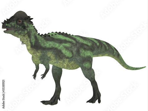 Pachycephalosaurus on White
